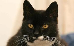 Britians oldest cat 2008