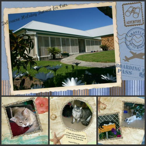 Whangareis Best Cat boarding Facility