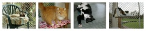 Whangarei cattery Collage 2